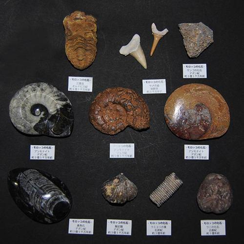 モロッコの化石10点セット
